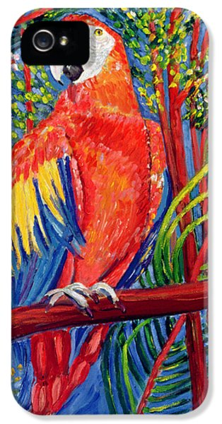 Macaw iPhone 5 Case - Pretty Polly by Patricia Eyre