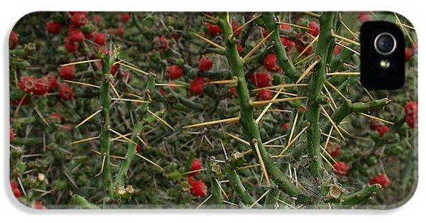 Prickly Pete Cactus IPhone 5 Case by Peter Piatt