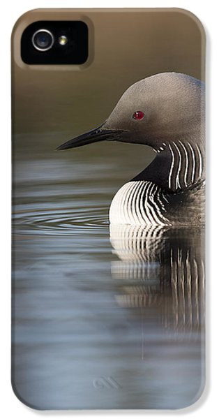 Profile Of A Pacific Loon IPhone 5 / 5s Case by Tim Grams