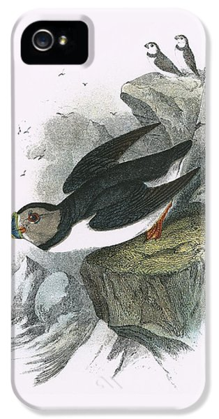 Puffin IPhone 5 Case by English School