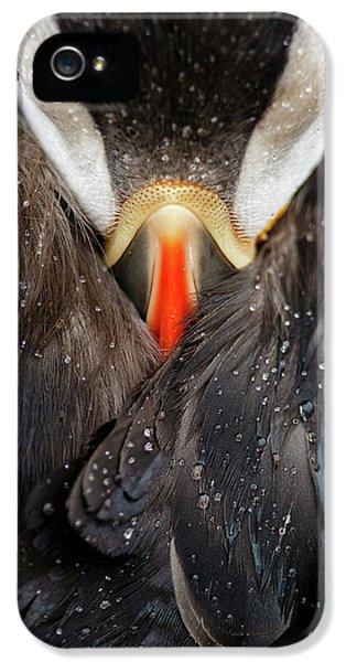 Puffin Studio IPhone 5 Case