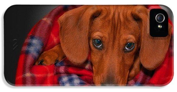 Puppy Love IPhone 5 Case by Susan Candelario