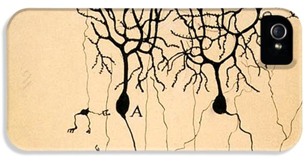 Purkinje Cells By Cajal 1899 IPhone 5 Case