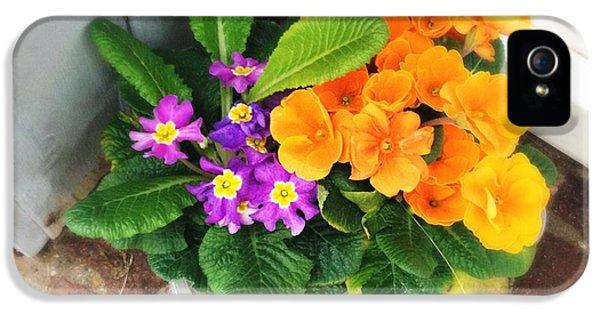 Orange iPhone 5 Case - Purple And Orange Flowers by Matthias Hauser