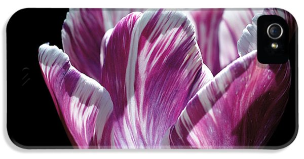 Purple And White Marbled Tulip IPhone 5 Case by Rona Black