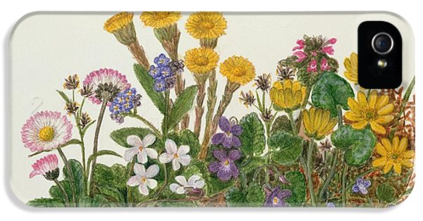 Purple And White Violets, Daisy, Celandine And Forget-me-not Wc On Paper IPhone 5 Case by Ursula Hodgson