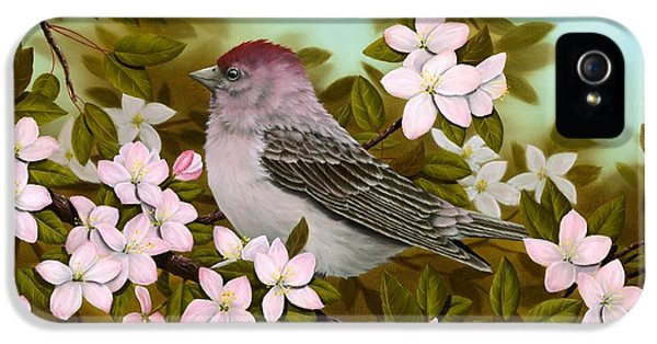 Purple Finch IPhone 5 / 5s Case by Rick Bainbridge