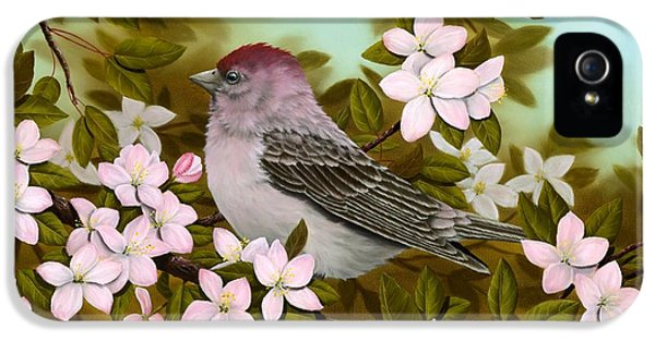 Purple Finch IPhone 5 Case by Rick Bainbridge
