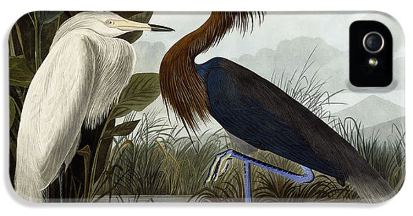 Purple Heron IPhone 5 Case by John James Audubon