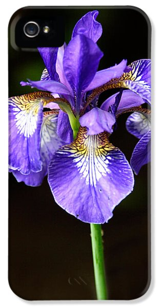 Purple Iris IPhone 5 Case by Adam Romanowicz