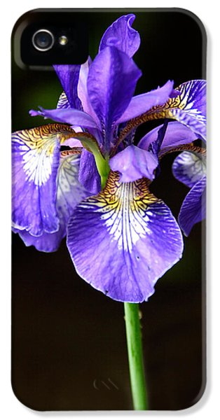 Purple Iris IPhone 5 Case