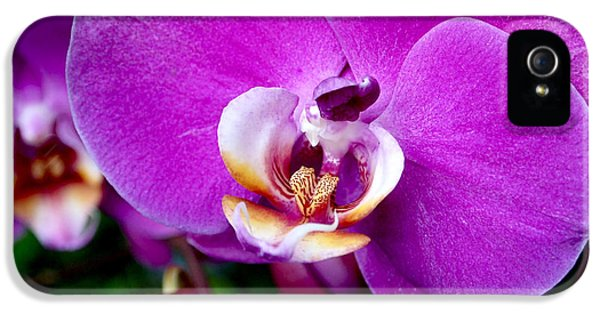 Purple Orchid IPhone 5 / 5s Case by Rona Black