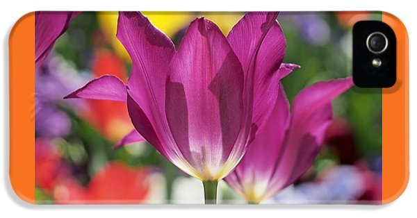Radiant Purple Tulips IPhone 5 Case by Rona Black