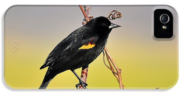 Radiant Red-winged IPhone 5 Case by Al Powell Photography USA