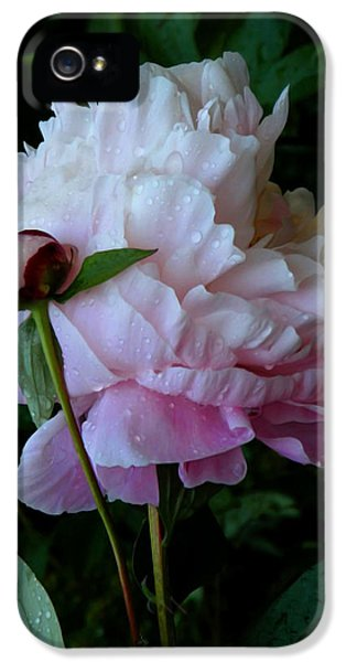 Rain-soaked Peonies IPhone 5 Case by Rona Black
