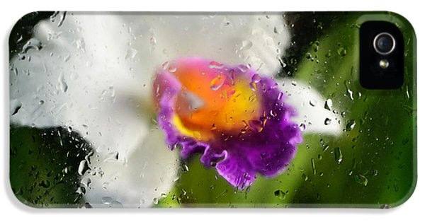 Rainy Day Orchid - Botanical Art By Sharon Cummings IPhone 5 / 5s Case by Sharon Cummings