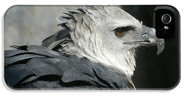 Harpy Eagle iPhone 5 Case - Raptor Profile by Fraida Gutovich