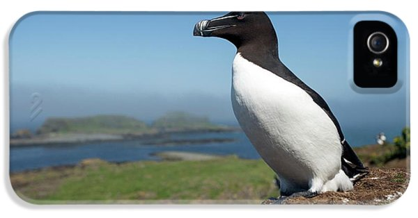 Razorbill On A Coastal Ledge IPhone 5 Case by Simon Booth