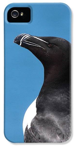 Razorbill Profile IPhone 5 Case by Bruce J Robinson