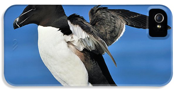 Razorbill IPhone 5 Case by Tony Beck