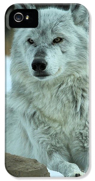 Ready For A Pedicure IPhone 5 Case by Adam Jewell