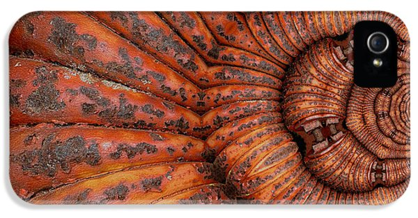 Recoiled 1 IPhone 5 Case by Wendy J St Christopher