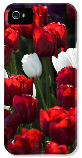 Red And White Tulips IPhone 5 Case by Yulia Kazansky