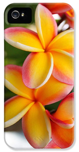 Plumeria Smoothie IPhone 5 Case by Brian Governale