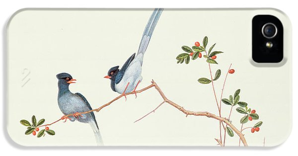 Red Billed Blue Magpies On A Branch With Red Berries IPhone 5 Case by Chinese School