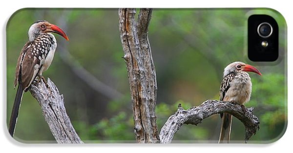 Red-billed Hornbills IPhone 5 / 5s Case by Bruce J Robinson