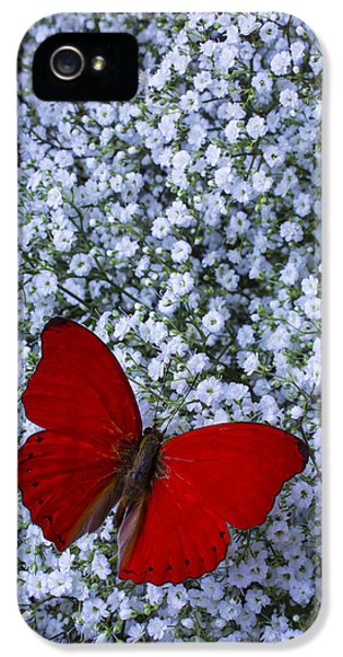 Red Butterfly And Baby's Breath IPhone 5 Case
