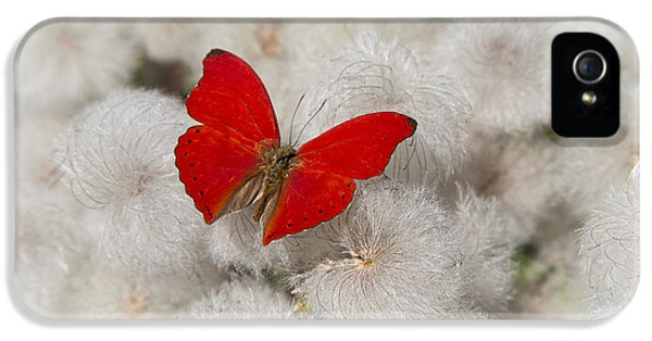 Red Butterfly On Flower Fluff IPhone 5 Case