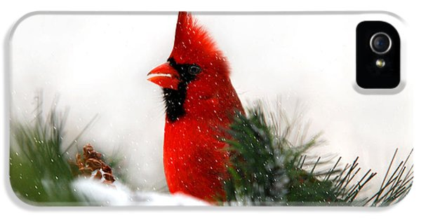 Red Cardinal IPhone 5 Case by Christina Rollo