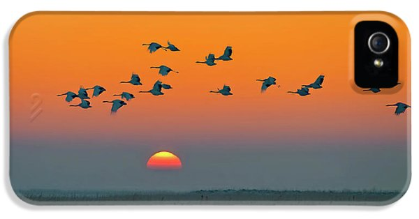 Crane iPhone 5 Case - Red-crowned Crane by Hua Zhu