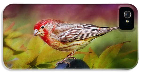 Red Finch IPhone 5 Case by Darren Fisher