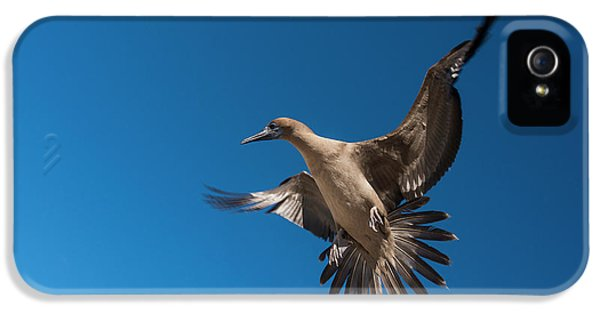 Red-footed Booby (sula Sula Websteri IPhone 5 Case by Pete Oxford