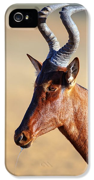 Red Hartebeest Portrait IPhone 5 Case by Johan Swanepoel