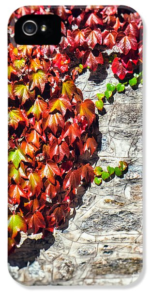 IPhone 5 Case featuring the photograph Red Ivy On Wall by Silvia Ganora