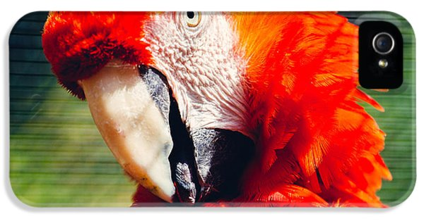 Red Macaw Closeup IPhone 5 Case by Pati Photography