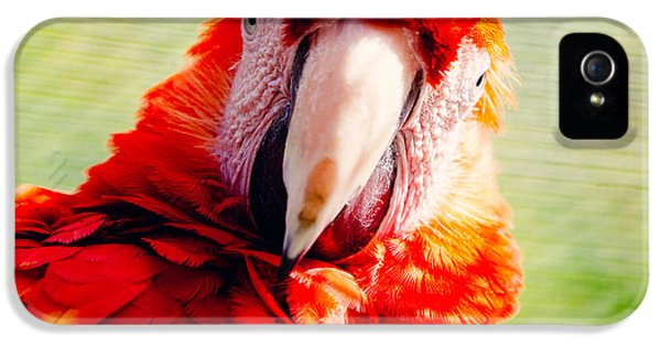Red Macaw IPhone 5 Case by Pati Photography