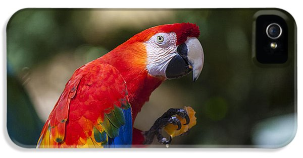 Macaw iPhone 5 Case - Red Parrot  by Garry Gay