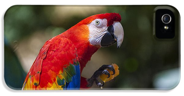Red Parrot  IPhone 5 Case by Garry Gay