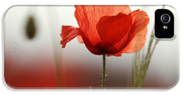 Red Poppy Flowers IPhone 5 Case by Nailia Schwarz