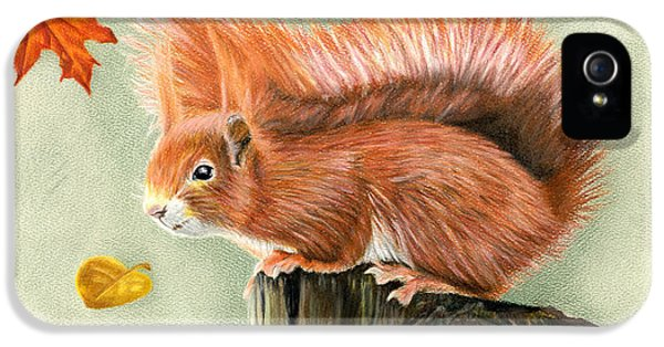 Red Squirrel In Autumn IPhone 5 / 5s Case by Sarah Batalka