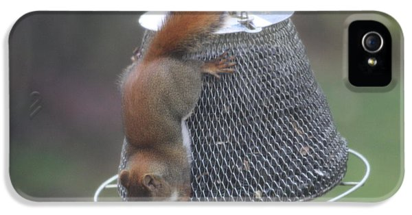 Red Squirrel On Hanging Feeder 1 IPhone 5 Case by Michael Collins
