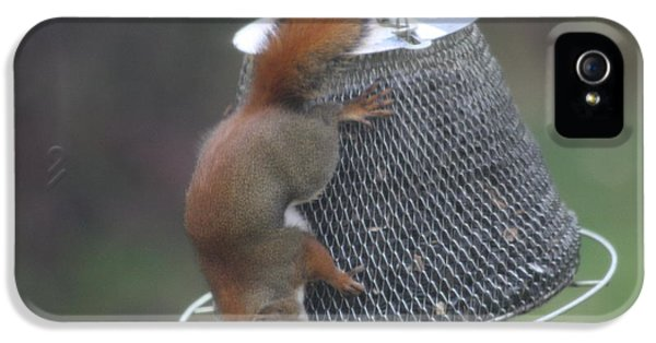 Red Squirrel On Hanging Feeder 4 IPhone 5 Case by Michael Collins