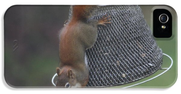 Red Squirrel On Hanging Feeder 5 IPhone 5 Case by Michael Collins