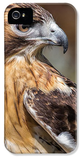 Red Tail Hawk IPhone 5 Case by Dale Kincaid
