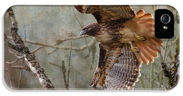 Red-tail Hawk In Flight IPhone 5 Case by Angie Vogel