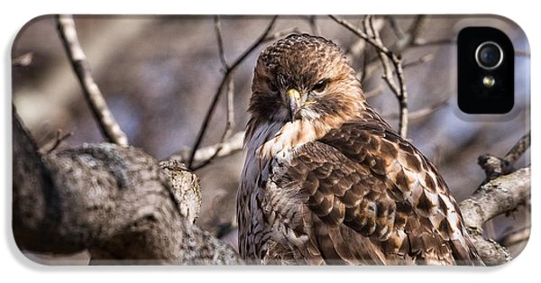 Red-tail Hawk Stare IPhone 5 Case by Jeff Sinon